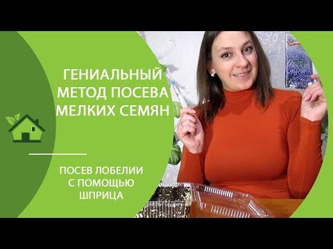 Вопрос: Когда сажать семена лобелии в Ленинградской области в 2020 году?