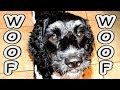 Dog Training to Speak or Bark Made Easy WOOF WOOF