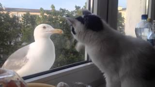 Баклан Vs Кошка
