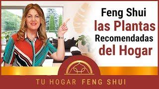 🌹Feng Shui y las plantas 🌷recomendables para la decoración🌼🌻