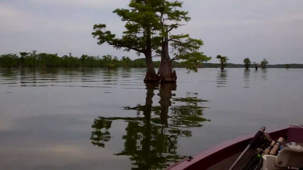 Reelfoot lake may 12 josh gowan and chippy chipman youtube for Reelfoot fishing report