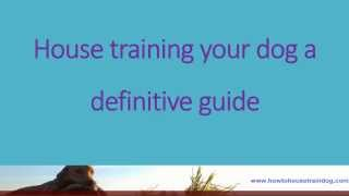 House Training Your Dog A Definitive Guide