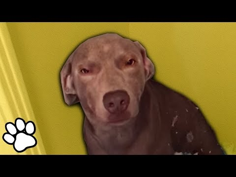 Sassy Troublemaker Pets   Try Not to Laugh   That Pet Life
