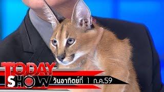 TODAY SHOW  3 ก.ค. 59 (2/3) แปลก เฮ ซ่าส์ แมวคาราคัล