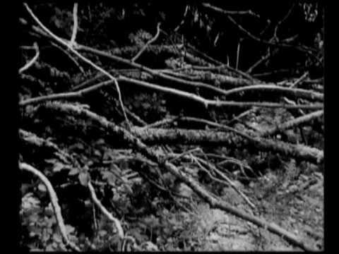 Harrachov | Fragment | 2006