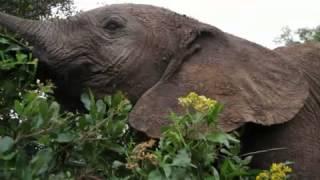 Orphan Elephants  Nathan Williamson