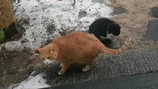 고양이밥주기