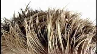 John Edwards - Hair