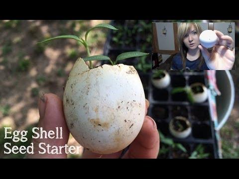 Egg Shell Seed Starter