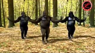 Video gorillas dance Rama rama uyyalo song download MP3, 3GP, MP4, WEBM, AVI, FLV Juni 2018
