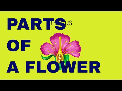 Flower Structure and its Parts | Biology |  Learn Videos For Kids | Science Videos for Kids