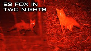 22 Fox Down on the Eastern Shore | FOXPRO Hunting TV