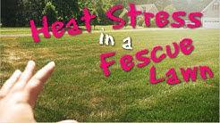 Heat Stress in a Fescue Lawn | PPLM | (804) 530-2540