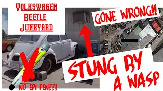 Volkswagen Beetle Junkyard Hunting GONE WRONG!!