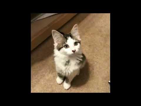 Cute Cats Vine Compilation