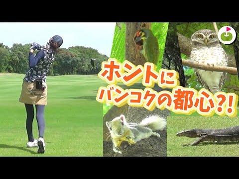 日本では滅多にお目にかかれないアイツが現れた!【ナワタニゴルフコース H15-18】