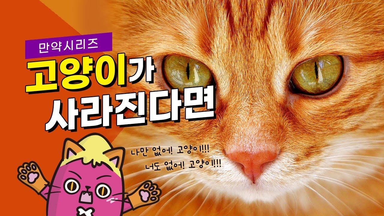 만약 내일당장 고양이가 사라진다면 무슨 일이 일어날까? (feat. 집사오열)