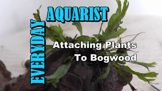 Attaching Plants To Driftwood & Bogwood