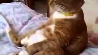 Кот смотрит мультик про  Винни Пуха. Умора!!!