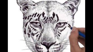 Drawing  Head Jaguar Full Step