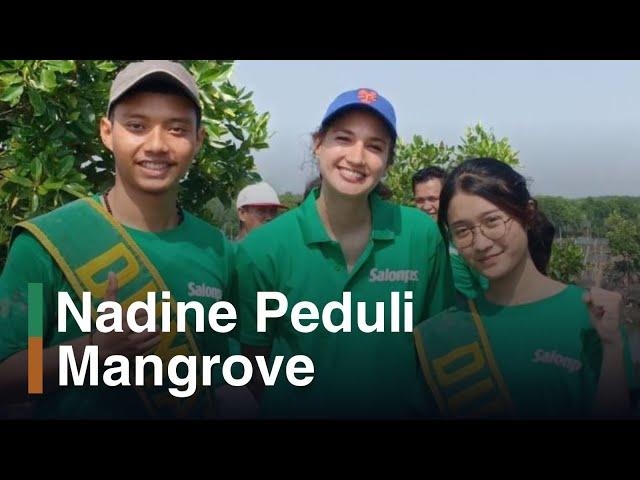 Chit Chat KeSEMaT with Nadine Candrawinata: Mangrove Mencegah Abrasi Pantai