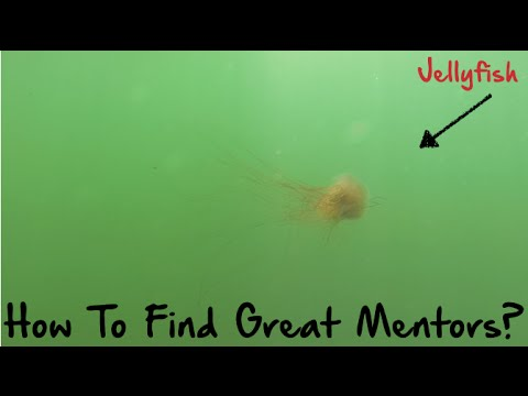 How to Find Great Mentors?