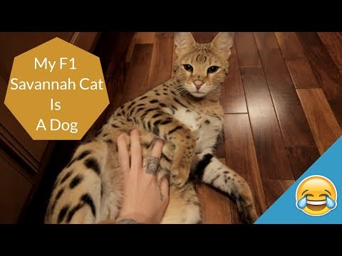MY CAT IS A DOG | Funny Vlog