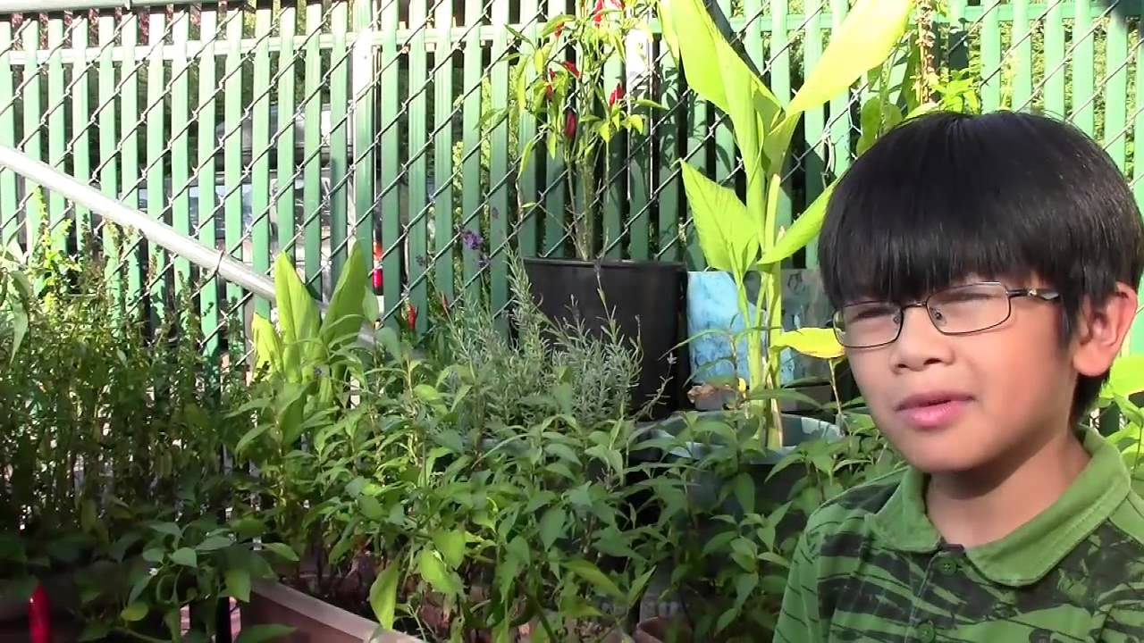 exotic vegetables herbs u0026 tropical plants from my mom u0027s enchanted