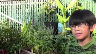 Exotic Vegetables, Herbs & Tropical Plants From My Mom's Enchanted Backyard Garden (preview)