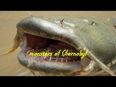 Речные монстры (1-9 сезон) новые серии смотреть онлайн
