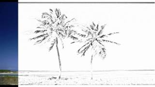 Auto Draw 2: Coconut Palms, Bahamas
