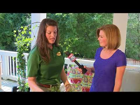 Pike Nurseries DIY Cutting Garden