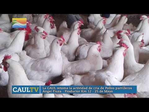 CAUL TV - 170520