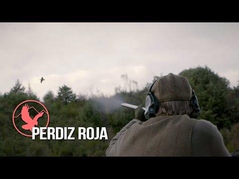 """PERDIZ ROJA"" - Walked up and Driven partridge shooting at Butler del Prado (Spain)"