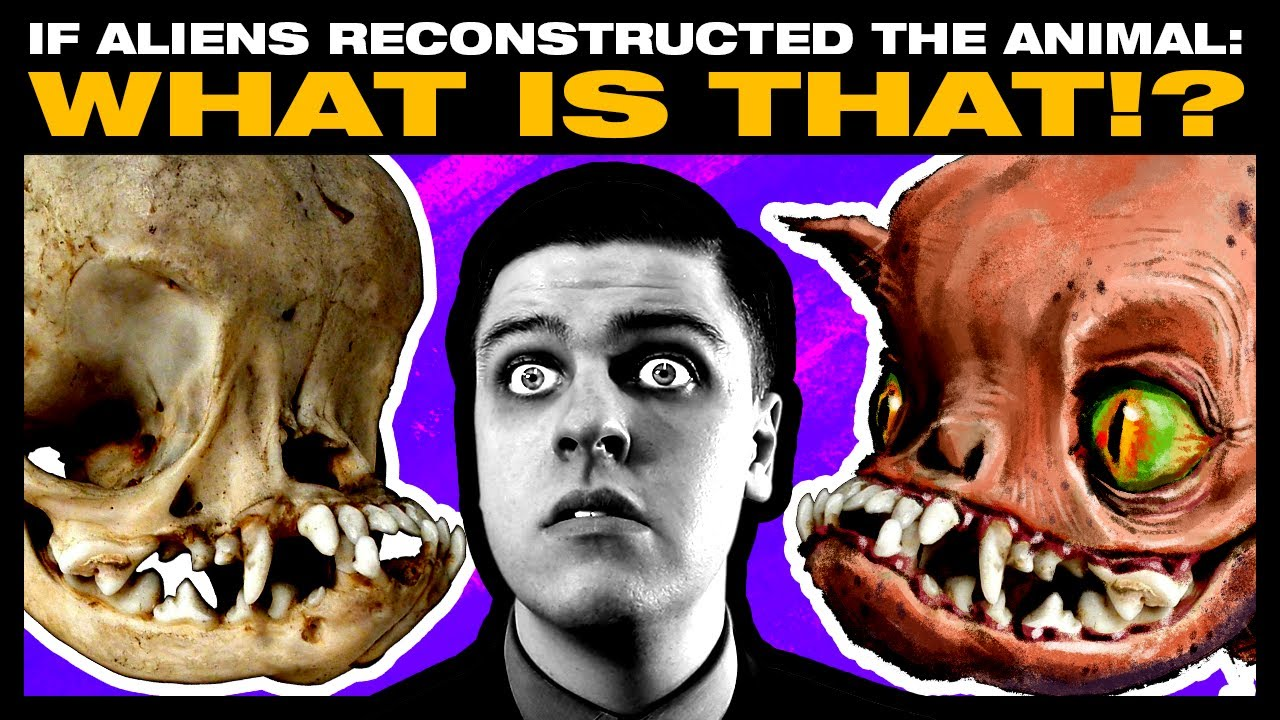 Download If Aliens Reconstructed Animals From Their Skulls