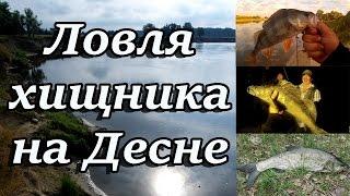 Ловля хищника на Десне. Спиннинг в жару.(Всем привет! Ко мне приехали гости из Киева. Их очень сильно привлекает река Десна, особенно места подальше..., 2016-08-31T14:05:58.000Z)