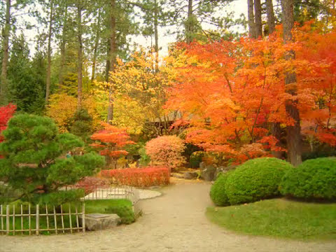 Japanese Gardens In Autumn ♪ ♫ ♩ ♬ FALL ☂  Manito Park ➟ Spokane , WA.