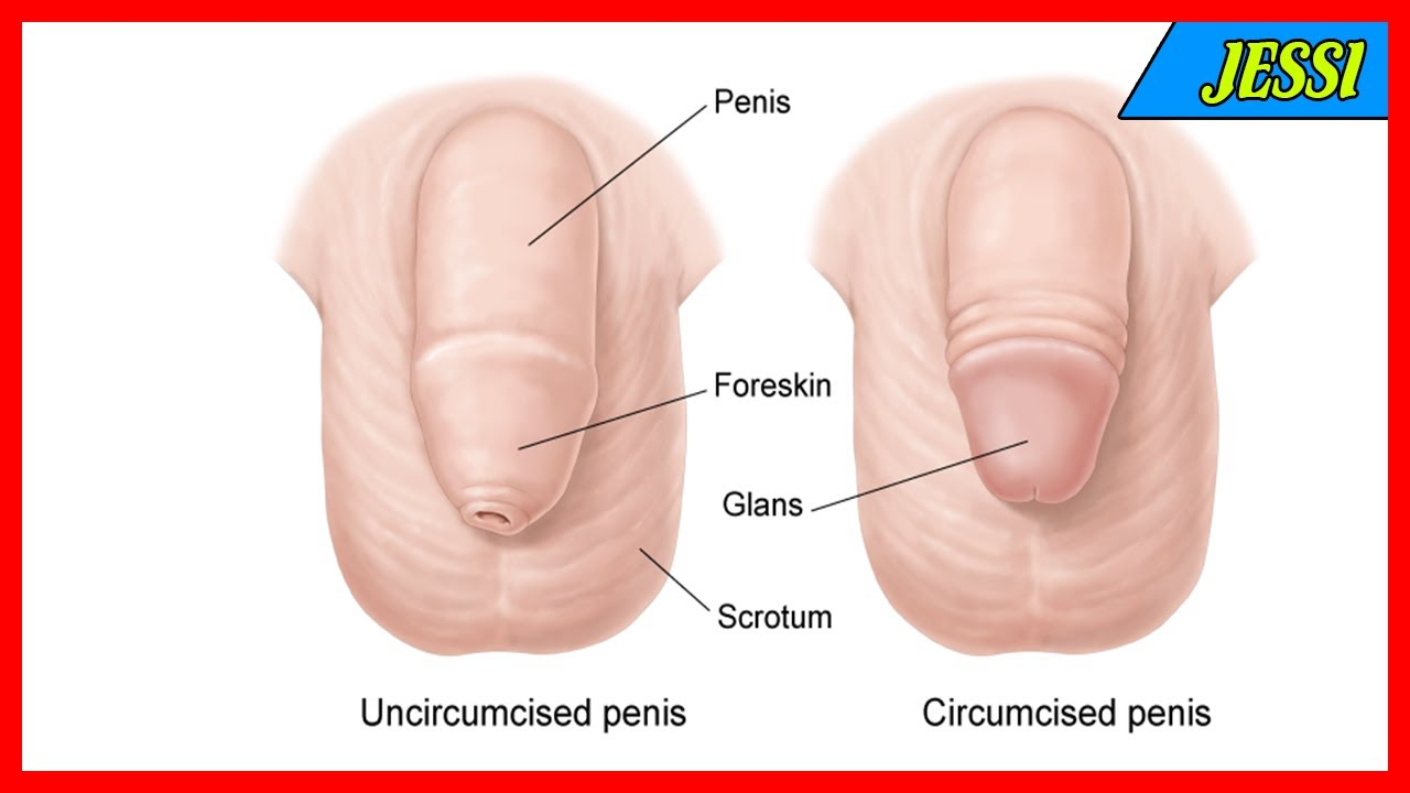 Penis uncircumcised pictures of