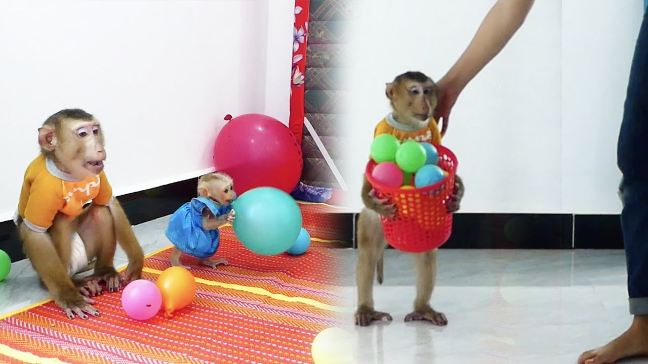Dodoo Doesn't Know Where To Go He Need Mum Help, Dodoo Take Basket Balls To Play With CC