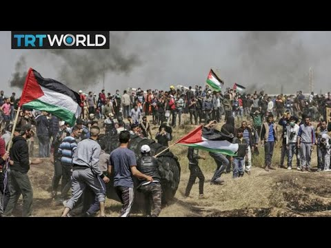 Israel - Palestine Tensions: Several Palestinians dead in border protests