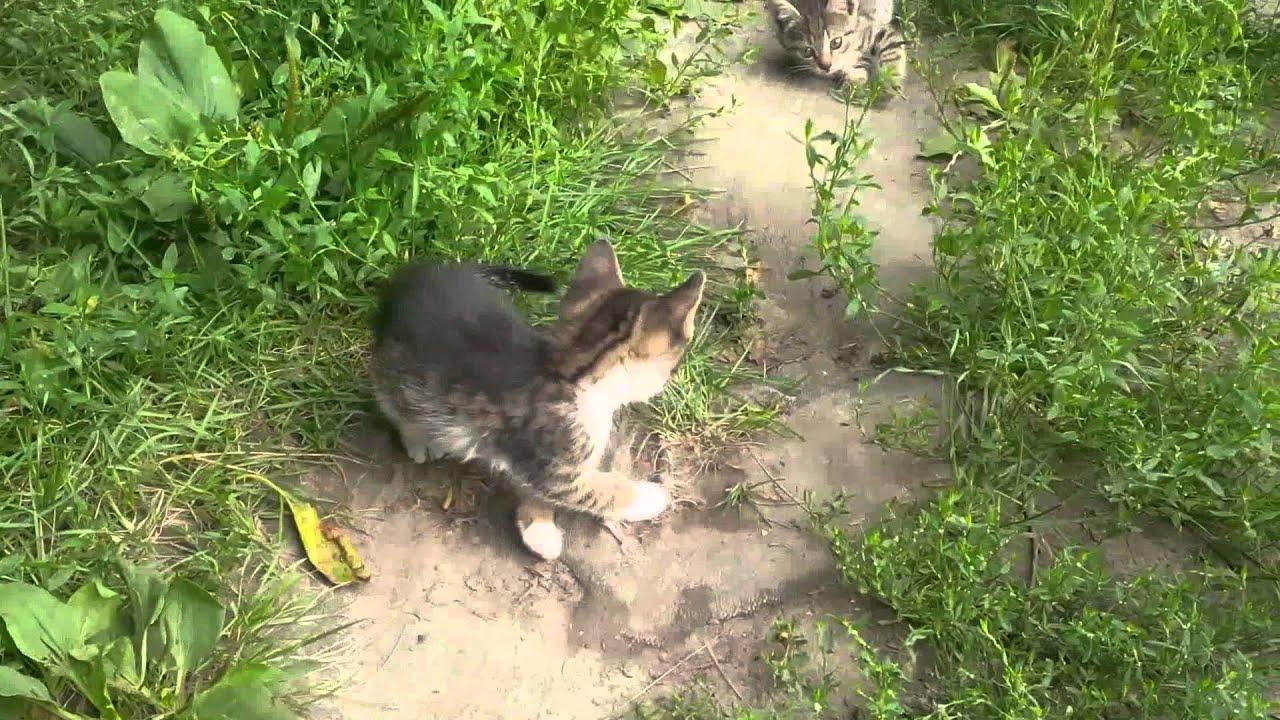 Топ 10 - Самые маленькие породы кошек! - YouTube