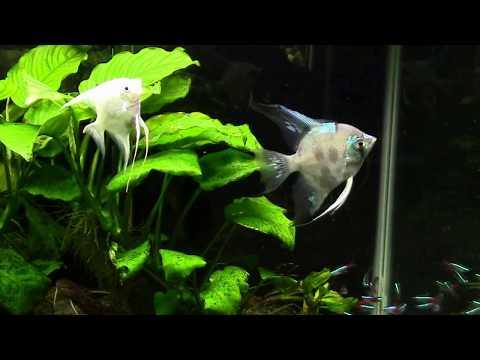 Budget LED Vs T5 High Output Aquarium Lighting