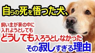 チャンネルにお越しくださいましてありがとうございます! Ayumiです。 ...