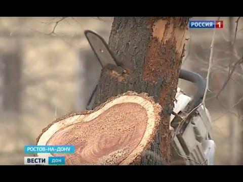 В администрации Советского района объяснили, почему спилены живые деревья