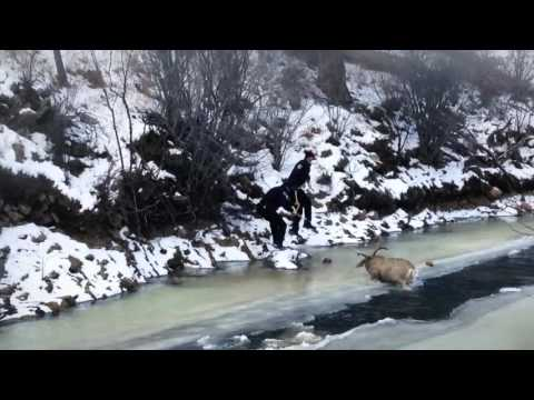 Buck rescued from frozen river by Colo. officers