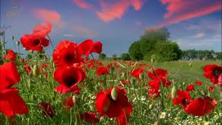 SPANISH MUSIC GUITAR LATIN SONGS INSTRUMENTAL RELAXING SENSUAL ROMANTIC SPA MASSAGE MUSIC