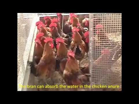 Chicken Waste Treatment