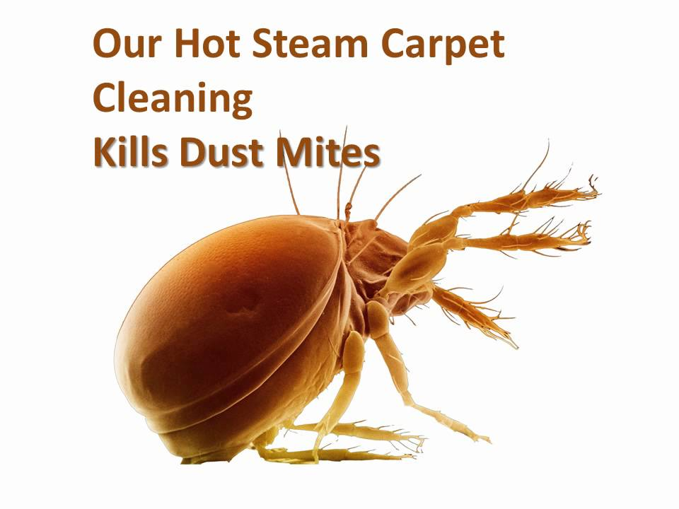 Carpet Cleaning Auckland, hot steam carpet cleaning kills dust mites