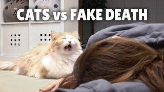 Cats vs Fake Death