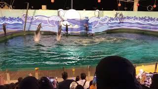 Dolphin Show at Fakieh Aquarium, Jeddah, Saudi Arabia
